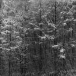 5123086_first-snow [1600x1200]