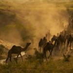 7221254_camel-caravan [1600x1200]